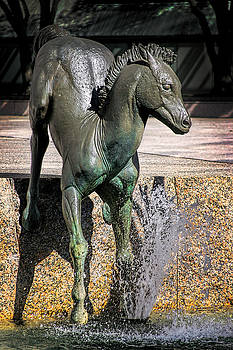 Mustang Colt by Joan Bertucci