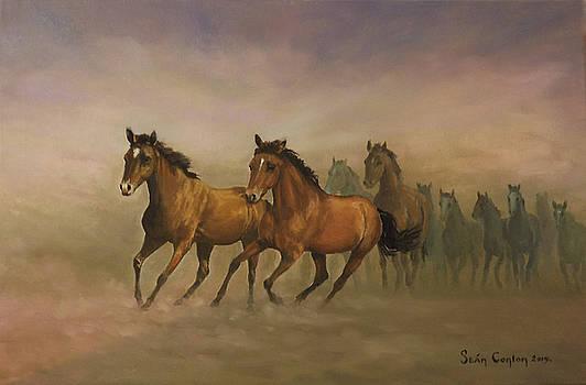 Mustang Freedom by Sean Conlon