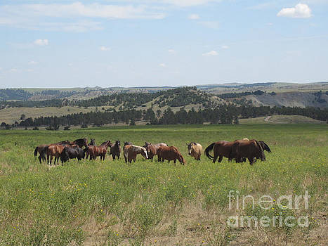 Mustang Herd by Brandy Woods