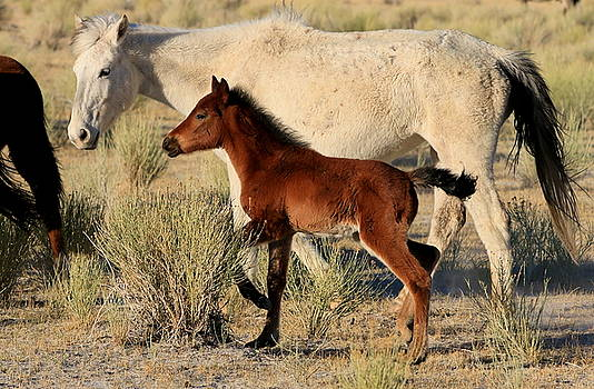 Mustang Mother and Foal by Ron  Romanosky