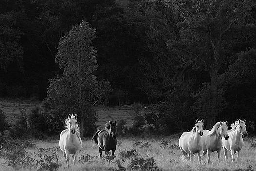Mustangs in the wild by Vonda Barnett