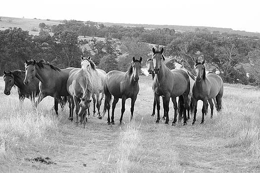 Mustangs on the path by Vonda Barnett