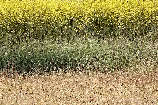 Mustard Abstract by Matt Tilghman