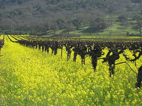 Mustard flowers by Kim Pascu
