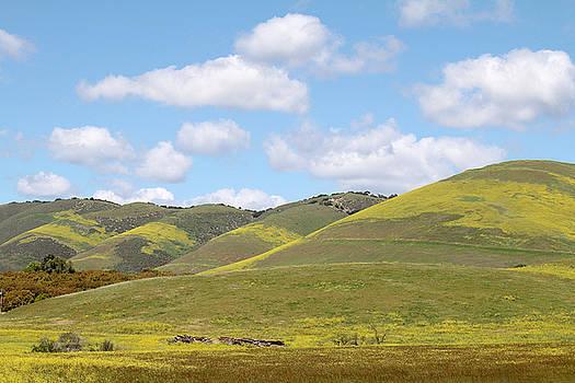 Art Block Collections - Mustard on Nipomo Hills