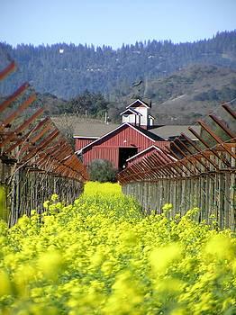 Mustard Season by Heather Bethke