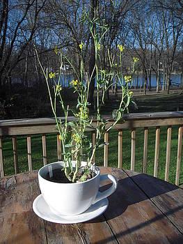 Mustard Seed Plant Cup by Deborah Finley