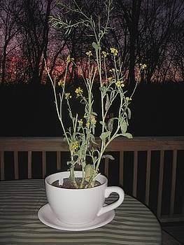 Mustard Seed Plant by Deborah Finley
