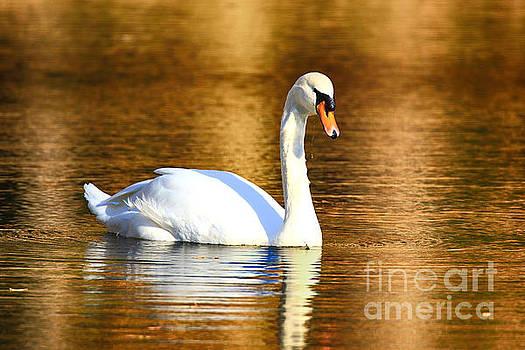 Mute Swan by Geraldine DeBoer