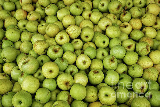 Mutzu Apples by Paul Mashburn