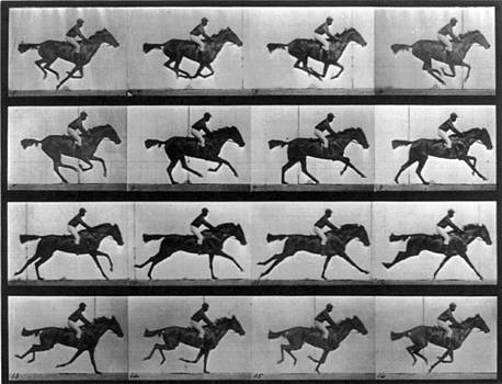 Photo Researchers - Muybridge Locomotion Racehorse