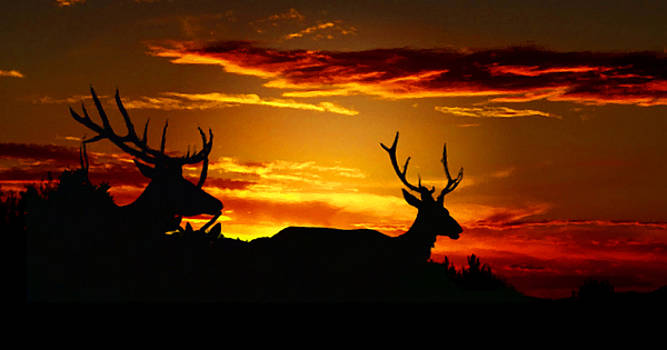 Mike Breau - Elk Sunset