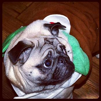 My Little Christmas PudPug by Natalie Anne
