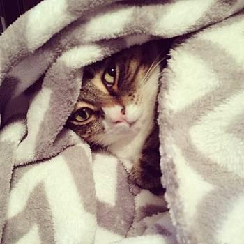 My Baby Snuggled Up! <3  #like #love by Shyann Lyssyj