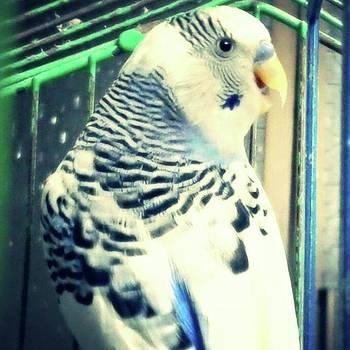 My Beautiful Karkar 🐦 😍  #bird by Eman Allam