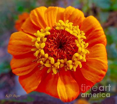 My Bit of Orange Zinnia Heaven by Kimberlee Baxter