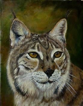 My Bobcat by Darlene Green
