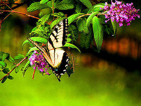 Madame Butterfly by Art By ONYX