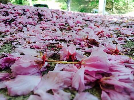 My flora by Priya Patankar