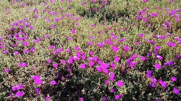 My Flower Field by Al Pascucci