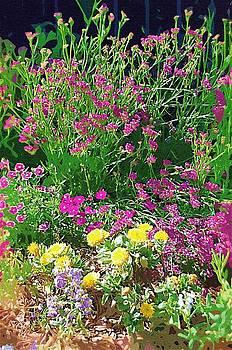 DONNA BENTLEY - My Garden