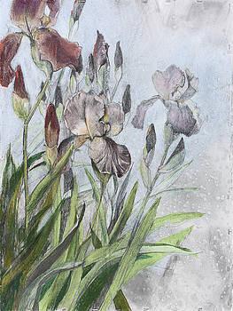 Iris Study by Debbie Moore