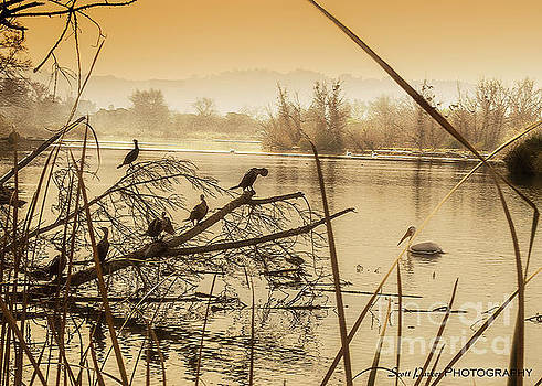 My Golden Pond 2 by Scott Parker