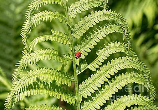 Barbara McMahon - My Lady Bug Awaits