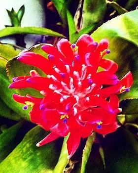 My Last Flower  by Arturo Cisneros
