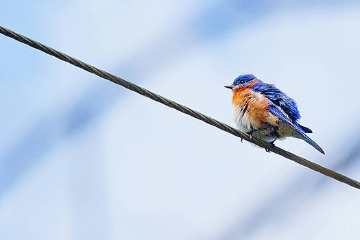 My Little Bluebird of Happiness by Linda Unger