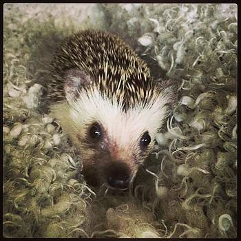 My Little Bundle Of Joy...and Quills by Emily Botelho
