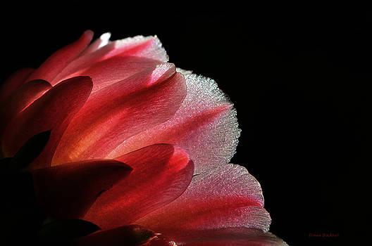 Donna Blackhall - My Little Cactus Flower