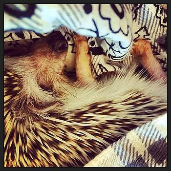 My Little Cuddle Buddy #hedgehog by Emily Botelho