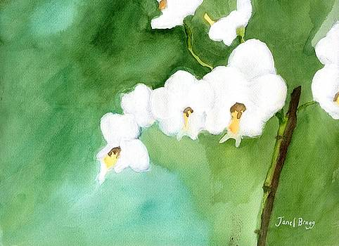 My Little Orchid in Green by Janel Bragg