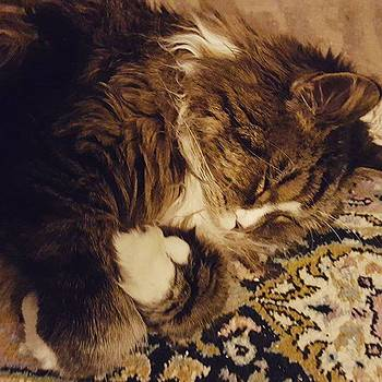 My Mainecoon, Napping At My Feet by Jeff Foliage