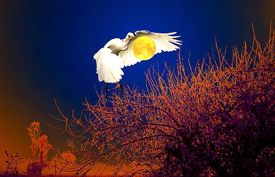 Bliss Of Art - My moon