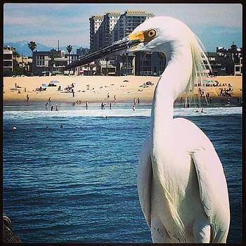 My New Friend From Venice Beach 😊 by Emily Botelho