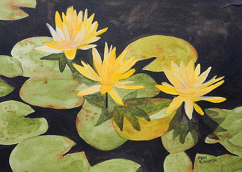 My Pond by Jean Blackmer