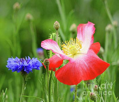 My Poppy by Nava Thompson