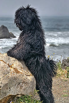 My Puli BJ on Beach by Robert Biaselli