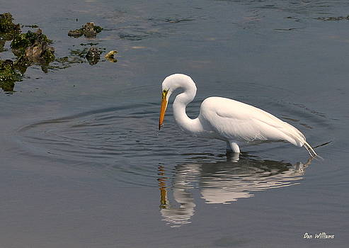 My Reflection by Dan Williams