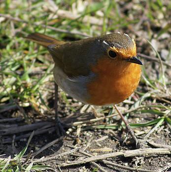 My Robin Friend 2 by Carol Lynch