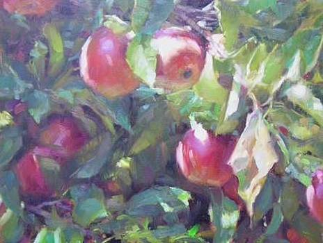 My Sisters Apples by Chuck Marshall