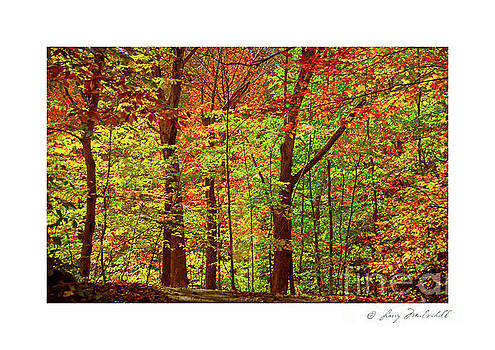 My Woodlands Ver 4 by Larry Mulvehill