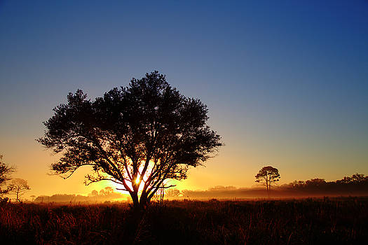 Myakka Sunrise by Patrick Anderson