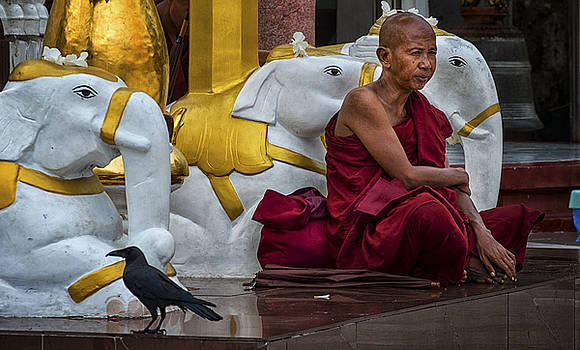 Myanmar Temple Elephants and Monk by David Longstreath