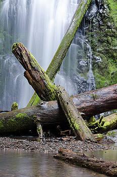 Margaret Pitcher - Mysteries in the Rainforest No. 2