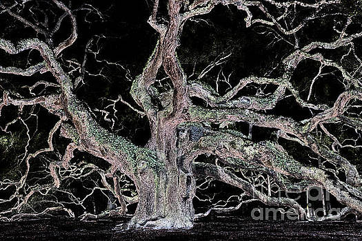 Mysterious Angel Oak Tree  by Dale Powell