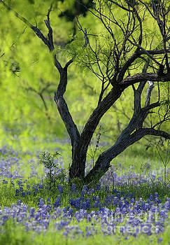 Mysterious Garden by Iris Greenwell