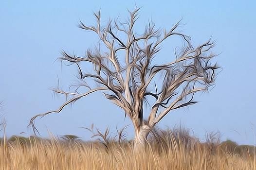 Mystic Buishveld Tree - 4 by Dave Harcourt